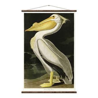Erstwhile Amerikaanse Pelikaan Poster Wanddecoratie & -planken Multicolor Canvas